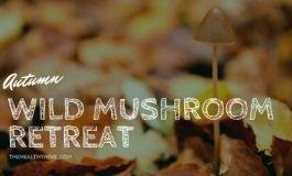 Autumn Wild Mushroom retreat video featured image